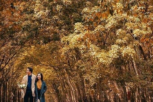 Ảnh cưới mùa lá vàng Bình Dương ngỡ là cảnh sắc thu Hàn Quốc - hình ảnh 10