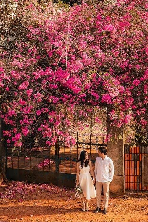 Ảnh cưới mùa lá vàng Bình Dương ngỡ là cảnh sắc thu Hàn Quốc - hình ảnh 9